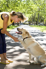 Woman shaking hands with dog in park, side view