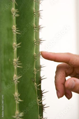 Man touching cactus needles, close-up