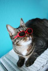 Cool Cat #1