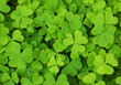 roleta: irish shamrock clover background