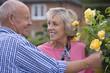 Senior woman tending rose bush, smiling at man