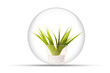 young plant in a glassy orb