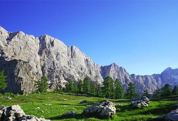 Alpine splendour