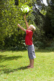 Boy (9-11) retrieving flying disc from tree in garden
