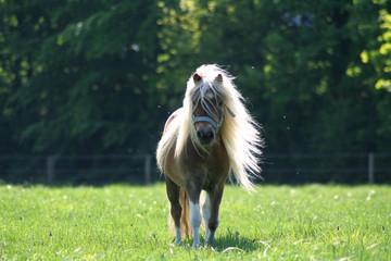 Pony rennt auf mich zu