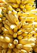 A huge bunch of ripe bananas