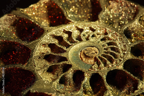Ammonite, macro, inclined