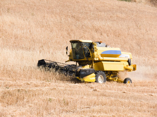 harvesting machine of the wheat