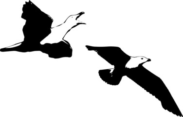 two seagulls flying vector