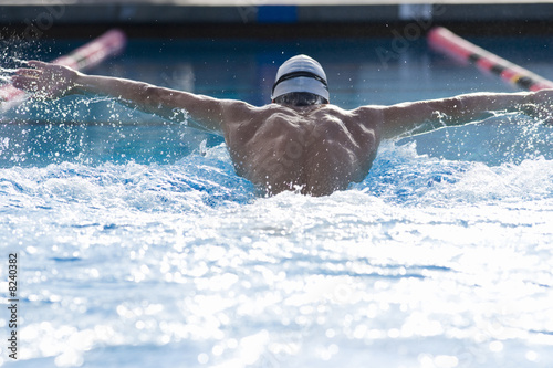 Male swimmer in swimming pool, rear view