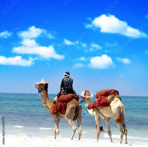 Foto op Aluminium Tunesië Kamel reiten