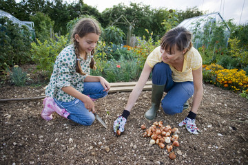 Mother and daughter (9-11) planting bulbs with trowel in garden, crouching in soil, smiling