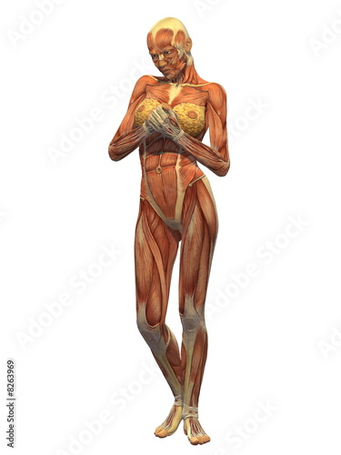 Human Body Muscle - Female Front