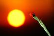 Leinwanddruck Bild ladybug sunrise