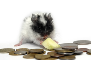 small hamster and coins