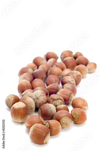 hazel nut  on white