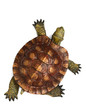 canvas print picture - Wooden turtle