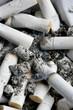 Sigarettes stubs