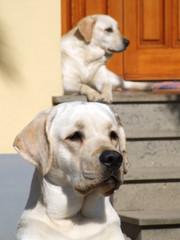 Cani sulla porta