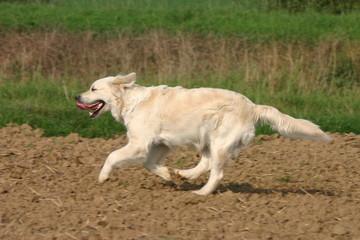 chien courir