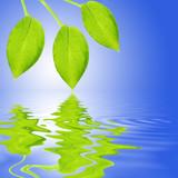 Green Leaf Reflection poster