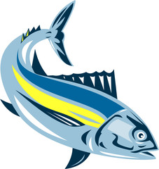 Albacore tuna fish