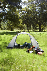 Camping gear in and beside incomplete dome tent in woodland clearing