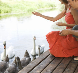 Young couple feeding swans