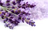 lavender - 8348979