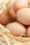 Braune Eier mit  Feder poster