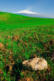 a green meadow with stone on background volcano Etna poster
