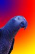 Leinwandbild Motiv Blauer Ara