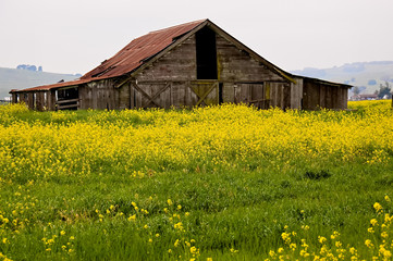 Sonoma Valley Barn