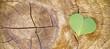 écologie et développement durable - 8392914