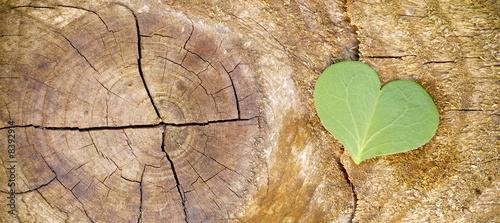 canvas print picture écologie et développement durable