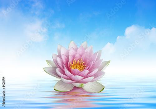 Gamesageddon Fleur De Lotus Et Reflets Lizenzfreie Fotos