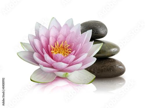 Fleur de lotus et galets zen de beboy photo libre de for Image galet zen