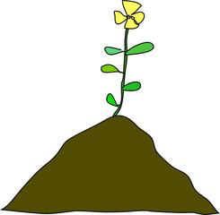 fleur épanouissement