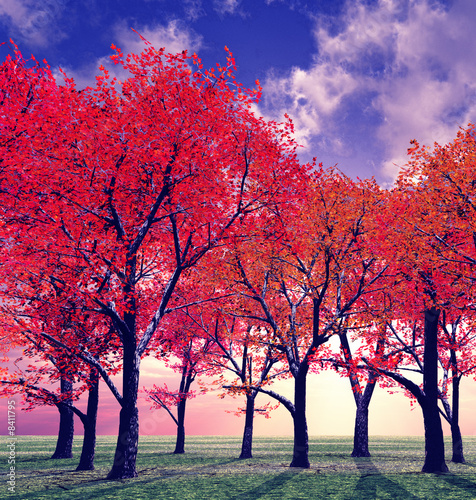 canvas print picture Beautiful autumn
