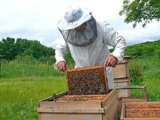Beekeeper 22