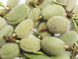 Crop of young unripe almonds nuts poster