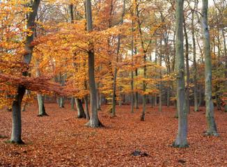 Forêt d'Ermenonville 19