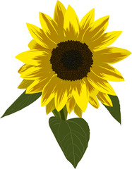 single sunflower illustration