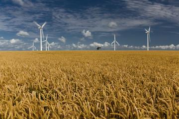 Eoliennes dans un champ de blé