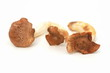 Seitlinge (Pilze)