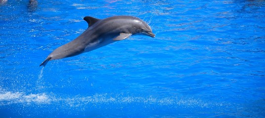 dauphin qui saute 3