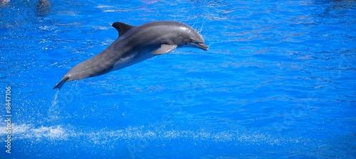 Foto op Aluminium Dolfijn dauphin qui saute 3