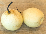 Two yellow pears at linen poster