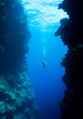 Diver swimming between underwater cliffs - 8482531