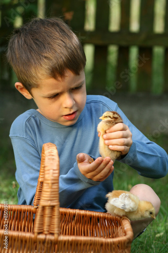 boy and chicken